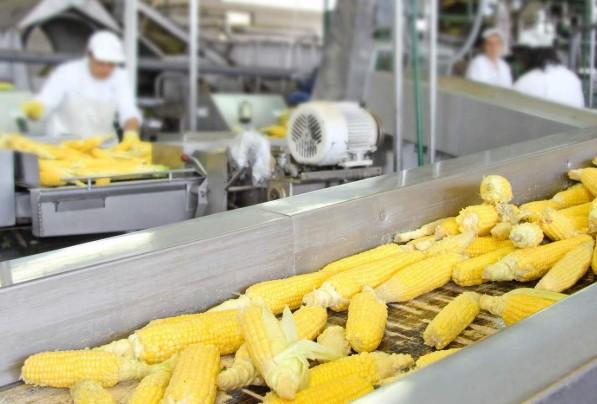 переработка кукурузы